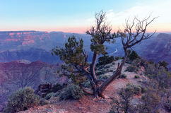 Grand Canyon Sunrise. A view of the Grand Canyon from the top of the east rim at sunrise. A portion of the Colorado River can be seen in the far distance Royalty Free Stock Photography