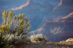 Grand Canyon Sunset, Arizona Stock Images