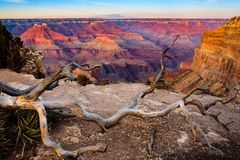 Grand canyon sunset landscape with dry tree foreground, USA Stock Images