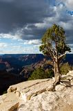 Grand Canyon Tree Stock Photos