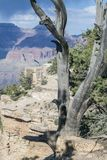 Grand Canyon with Tree Stock Photo