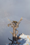 Grand Canyon Tree in Winter Storm Royalty Free Stock Images