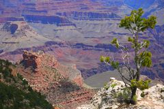 Grand Canyon and Trees Stock Images