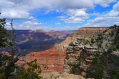 Grand Canyon and Trees. A sunny day on the South Rim royalty free stock photo