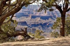 Grand Canyon through the trees Royalty Free Stock Photos