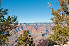 Grand Canyon through trees Royalty Free Stock Photos