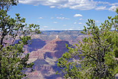 Grand Canyon Through the Trees Royalty Free Stock Image