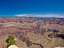 Grand Canyon und Baum Stockfotos