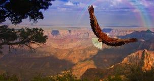 Grand Canyon USA. Eagle takes flight over Grand Canyon USA Stock Image