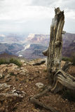 Grand Canyon van Colorado Stock Foto