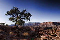 Grand Canyon view. A tree hanging over the Grand Canyon Stock Photos