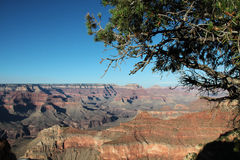 Grand Canyon - View from the south rim. With old tree stock photos