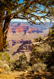 Grand Canyon. A view into the Grand Canyon from the South Rim Stock Images