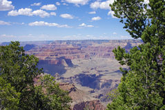A Grand Canyon View through the Trees Royalty Free Stock Image