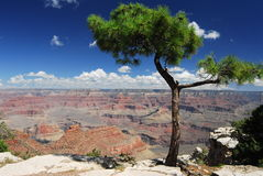 Grand Canyon viewpoint and juniper tree stock photo