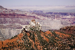 Grand Canyon Vista Royalty Free Stock Photos