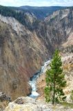 Grand Canyon von Yellowstone Lizenzfreie Stockbilder
