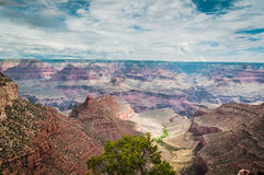 Grand Canyon. And wild life colorful Stock Image