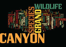 Grand Canyon Wildlife Text Background  Word Cloud Concept Stock Photography