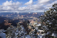 Grand Canyon winter scene Stock Images