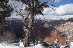 Grand Canyon winter scene Royalty Free Stock Photos