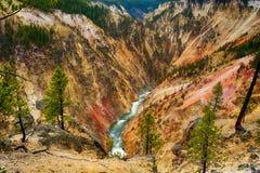 grand canyon Yellowstone obrazy royalty free