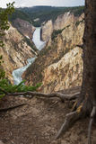 The grand canyon of yellowstone Stock Photography