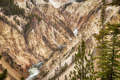 Grand Canyon Of Yellowstone Royalty Free Stock Images