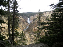 The Grand Canyon of Yellowstone among trees Royalty Free Stock Image