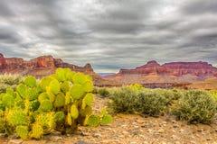 Grand- CanyonNationalpark Lizenzfreie Stockbilder
