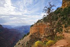Grand Canyonnationalpark, Arizona USA Arkivbilder