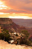 Grand- CanyonNationalpark, USA Stockfoto