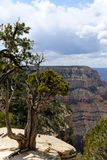 Grand- CanyonNationalpark VIII stockfotografie