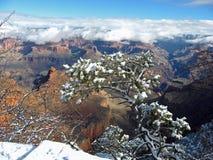Grand- Canyonschnee I Lizenzfreies Stockfoto