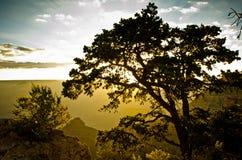 Grand Canyonsoluppgång bak Tree Arkivfoto