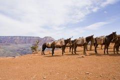 Grand- Canyontransport Stockfoto