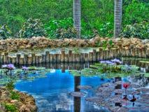 Grand Cayman пусковые площадки lilly Стоковая Фотография