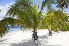 Grand Cayman Beaches. At the beginning of Seven Mile Beach on Grand Cayman island (Cayman Islands stock photos