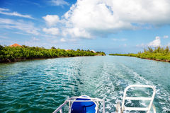Grand Cayman boat ride. Boat heads back to the dock from the ocean via a channel between the mangroves Royalty Free Stock Photography