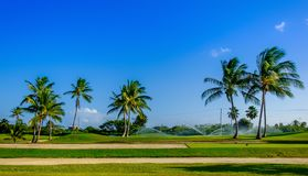 Grand Cayman-Golf Course royalty free stock photo
