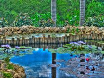 Grand Cayman lilly pads Stock Photography