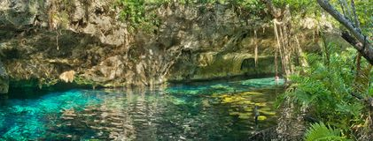 Grand Cenote in Mexico. Grand Cenote. This is one of the most famous cenotes in Mexico Royalty Free Stock Images