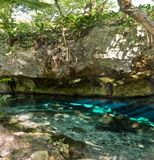 Grand Cenote one of the most famous cenotes in Mexico stock photo