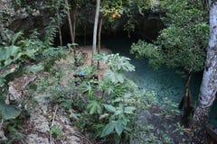 Grand cenote in Yucatan, Mexico. Grand cenote is located 4 km from Tulum in Yucatan peninsula, Mexico royalty free stock photos