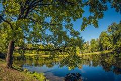 Grand chêne vert Verger en parc de ville avec l'étang lentille de fisheye de perspective de déformation photo stock