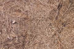 Grand champ de paille, paille sèche, texture de fond de paille Photos libres de droits
