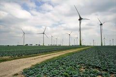 Grand champ végétal avec le chou de Milan en été image libre de droits