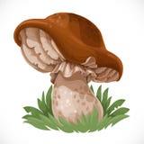 Grand champignon comestible dans l'herbe illustration libre de droits