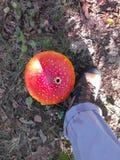 Grand champignon de couche Image libre de droits