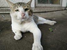 Grand chat Images libres de droits